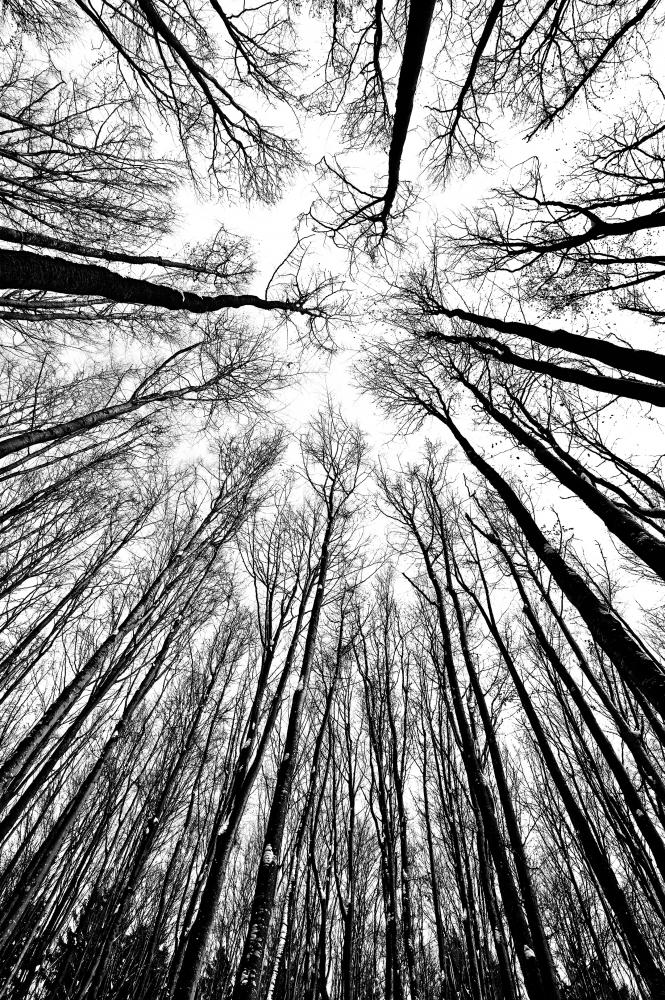 Easy Glass Splashbacks   Black And White Trees