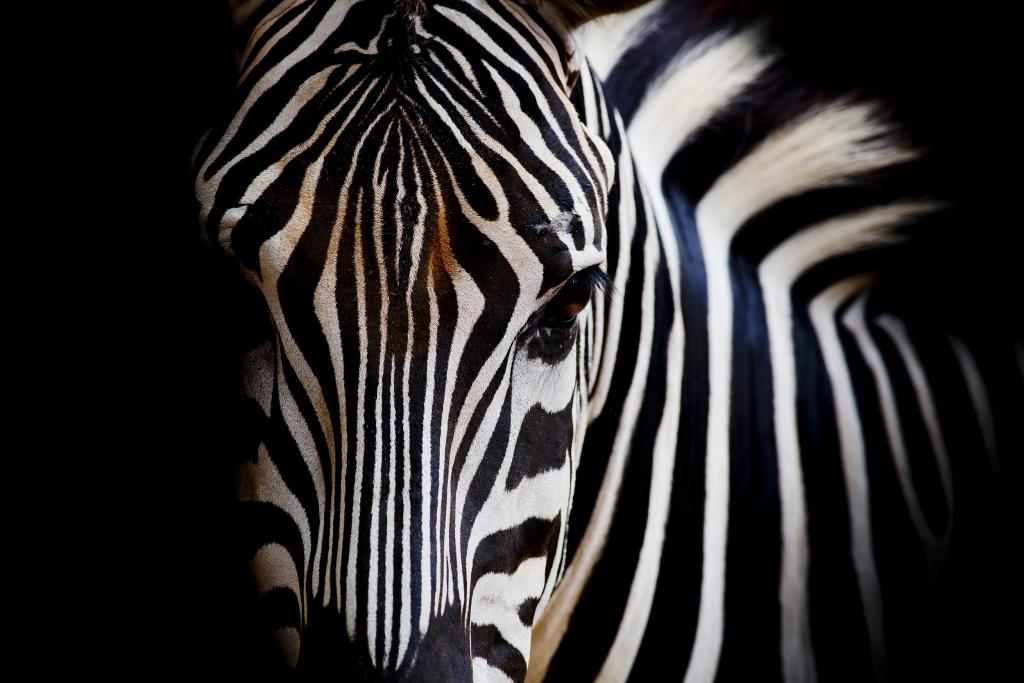 Printed glass splashbacks of Animals