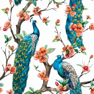 Elegant Peacocks
