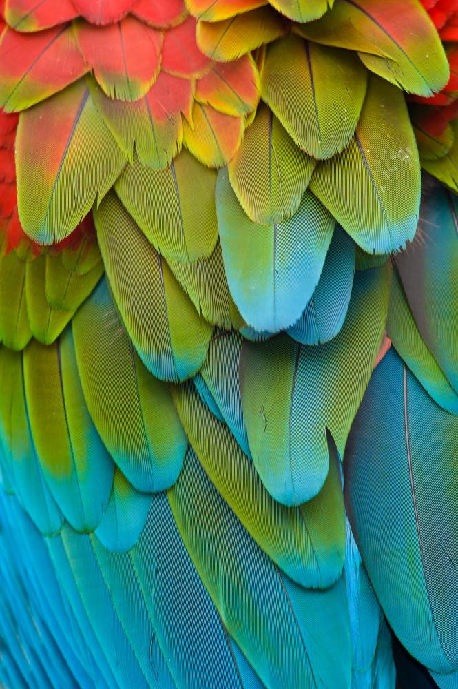 Printed glass splashbacks of Birds