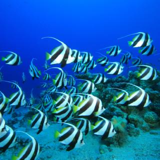 Shoal Of Tropical Fish