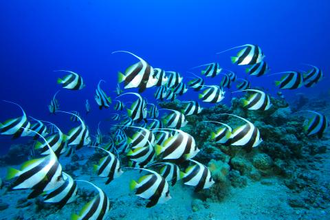 Printed glass splashbacks of Fish