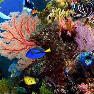 Tropical Fish Scene 1