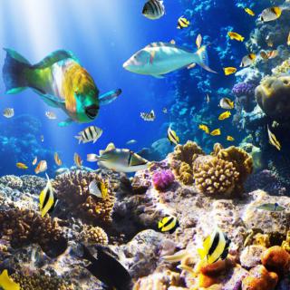 Tropical Fish Scene 2