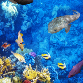 Tropical Fish Scene 3