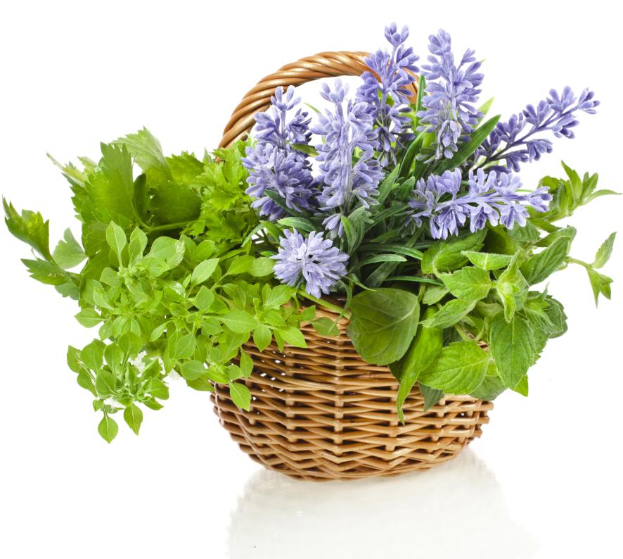 Basket Of Herbs