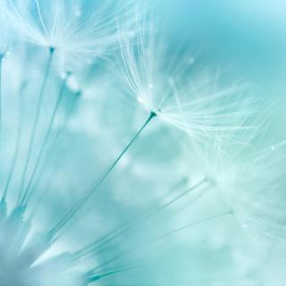 Sparkling Blue Dandelions
