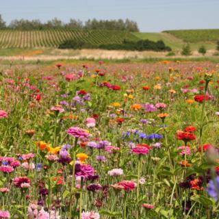 Flowery Field