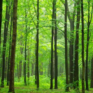 Treelined Walk